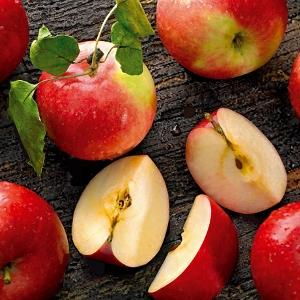 Плод без вкуса или наоборот сладкое или горькое