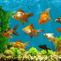 аквариум с рыбками сонник
