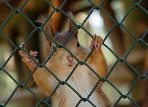 К чему снится зоопарк с животными