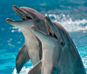 секс дельфина с девушкой в басейне