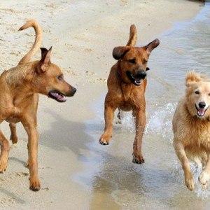 Фото Сонник видеть много собак