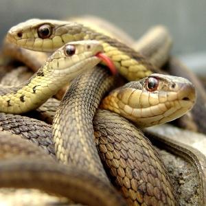 Что означает сон, если змеи кусают и впиваются