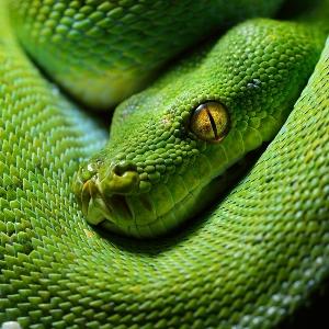 Что предвещает сон со змеей в доме