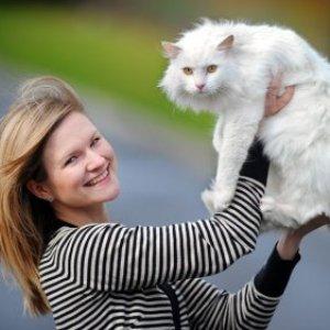 Взять кота белого