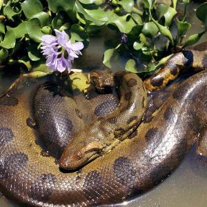 Если змея нападает на вас в дороге во сне