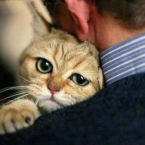 Если приснилось что убивают кота