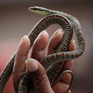 Приснилось как змеи кусают кого-либо
