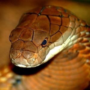Змея, приснившаяся в чужом доме