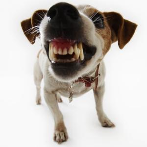 К чему снится нападение собственной собаки
