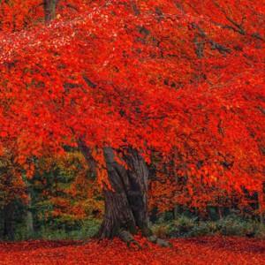 красную траву или листву деревьев