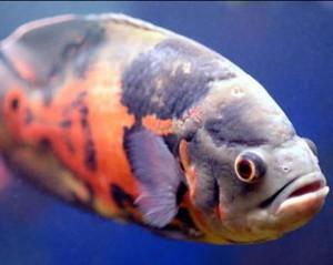 сонник видеть себя рыбой