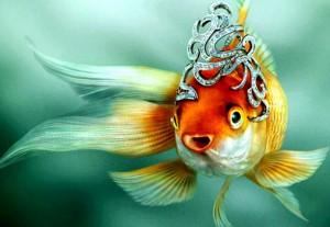 сонник золотая рыбка