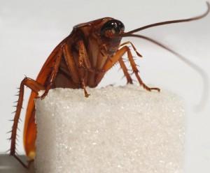 сонник тараканы убиты