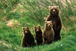 увидеть во сне медведей
