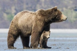 Секс с медведем во сне