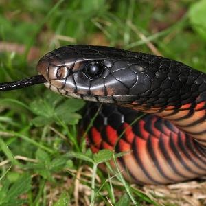 Что о снах с черными змеями говорит новый сонник