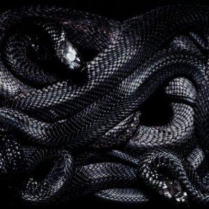 Если чёрные змеи разных размеров приснились в доме