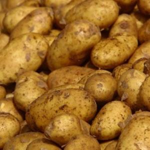 Если приснился сырой картофель