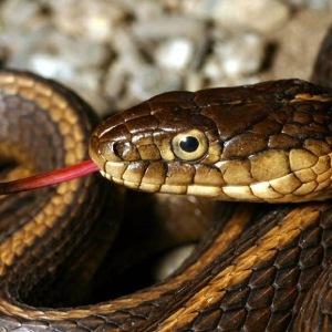 К чему снится укус мертвой змеи