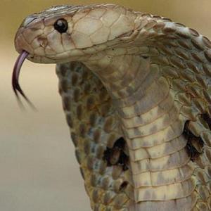 Общее значение снов о нападении змей