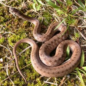 Приснилось как змея укусила за ногу или палец