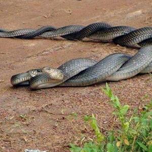 Трактование снов со змеями по соннику Ванги