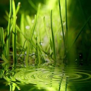 К чему снится зеленая трава и что она символизирует — откроем сонник
