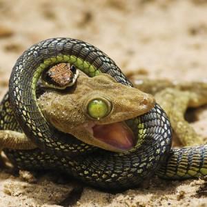 К чему снится змей подземный