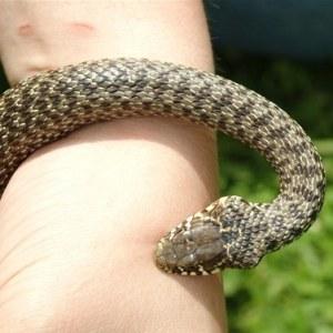 Змея укусила за руку – чего ожидать от такого сна