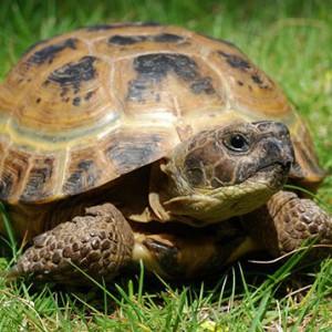 видеть во сне черепаху живую