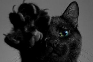 К чему снится много черных котов