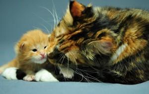 что означает кошка с котятами во сне
