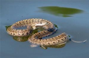 к чему приснилась сонник ванги змея