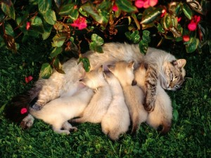 кошка и котята во сне