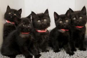 Сниться много черных котят фото