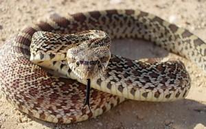 приснилось змея кусает змею