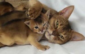 снится кошка и котята