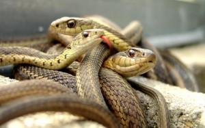 сонник змея кусает змею