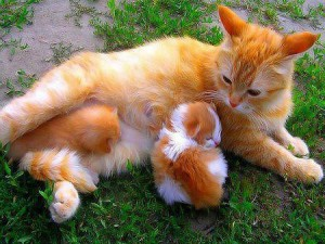 увидеть во сне кошку с котятами