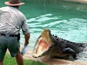 крокодил к чему снится женщине