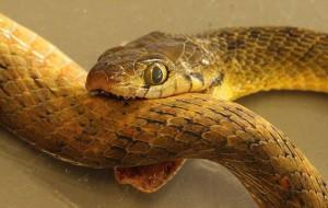 змея кусает другую змею во сне