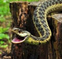 Что означает сон, в котором змея кусает змею? К чему такие предвестники?