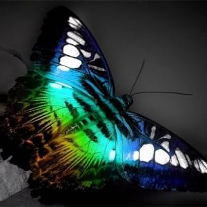 Большая и красивая бабочка