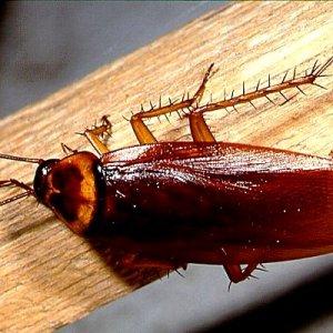 К чему снятся жуки и тараканы
