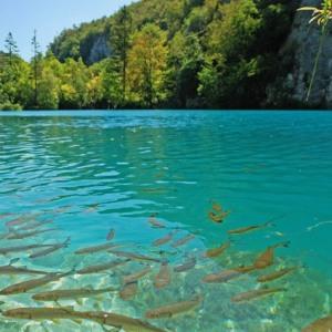 К чему увидеть озеро с рыбами