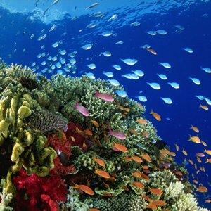Океан с рыбами – что предвещает сон