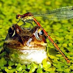 Чем сулит увиденное во сне болото? К чему оно снится, размышляет сонник