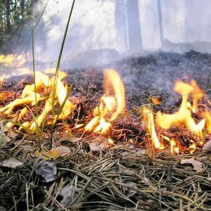 Снился Пожар И Я Его Тушу