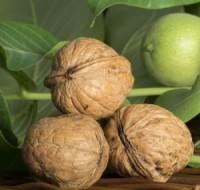 О чем предупреждают и к чему снятся грецкие орехи – толкование любимых сонников.