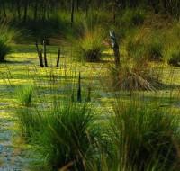 Чем сулит увиденное во сне болото? К чему оно снится, размышляет сонник.